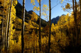 The aspens trees glow with late evening light Monday  September 27, 2005, at the Maroon Bells in...