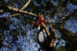 (1/25/05, Pondicherry, India)  Manimarin, 13, has fun climbing a tree near the medical camp.  The...