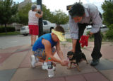 (8/02/2004, DENVER, CO)   Jacob Garcia, 8, tries to get his grandmother's Chihuahua to drink some...