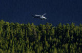 A search and rescue helicopter makes its way over the tree line along Lawn Lake Trail Saturday...
