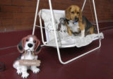 Dogs on a porch swing.