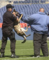 Denver Police  Officer Doug Church removes his dog Arco from fellow officer Brett Titus duirng the...