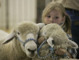 Megan Cothren, 5, of Gill, Colo., has her hands full holding two of her families Corriedale Wool...