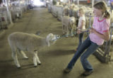 Nicole Vining, 13, of Cheyenne, Wyo., pulls on one of the families 15 sheep being led to the White...