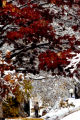 (DENVER Colo., November 1, 2004)  The mixture of snow and the fall colors makes it a scenic...