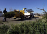 Denver, CO., April 14, 2004. Denver Digs Voulenteer Tom Ledgerwood, of Denver unloads one of 613...