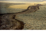 (Pinedale, Wyoming., October 4, 2004) A new road cut through the sagebrush for natural gas...