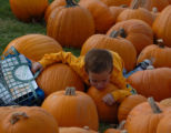 [Denver, CO]--Dylan McKnight, 4, contemplates pumpkins in a  pumpkin patch at St.Luke's United...