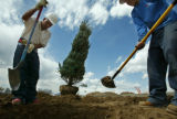 Landscaping at Coal Creek Village in Lafayette, Colo., on Thursday, April 14, 2004.  TouchStone...