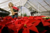 Denise Robbins (cq) of Denver looks over the selection of poinsettias at City Floral in Denver on...