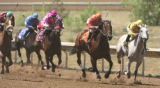 Thoroughbreds come around the final turn towards the finish line  duirng an afternoon race  at...