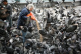 (NYT27) LONDON  -- June 19, 2006 -- LONDON-PIGEONS -- Members of the advocacy group Save the...