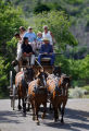 Eric Bartels (cq, left in black driving) of Mancos, Co. leads a family on a stagecoach ride...