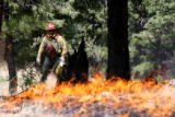 A Juniper Valley Fire firefighter starts a burnout of the southwest flank on Thursday, June 15,...