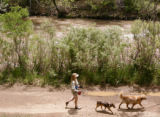 KAS050 Bertie Garrett (cq) walks Bonnie, center, and Cody the Great along Clear Creek at Grant...