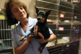 Dr. Jeannette Barnes (cq) Veterinarian at  the Capitol Hill Animal Care Center with...