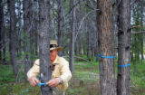 Malcolm Brown, cq, with Grand County Pest Control, ties blue ribbons onto pine trees to mark which...