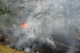 A hot spot burns on the southern edge of the  Mato Vega Fire near  the Paradise Acres subdivision...
