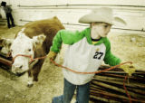 Denver, CO Jan. 18, 2006 Brandon Olson, 12, of Franktown, CO, moves a Miniature Hereford for his...