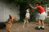 Tami Bishop, 36, of Denver plays with her two dogs Zander and Hidye in the backyard of her house...