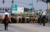 More than 650 Corriente long horned steers move through downtown Cheyenne on the way to Frontier...