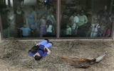 Debbie Hegner, Primate Keeper, takes a nap with Umande in the outdoor exhibit with potentially...