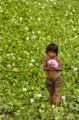 Kampong Thom, Cambodia.  November 12, 2003.   A young girl collects water hyacinths in front of...