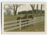 Horses on the Belmar Farm